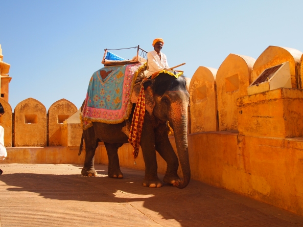 an elephant proceeds down from the Amber Fort