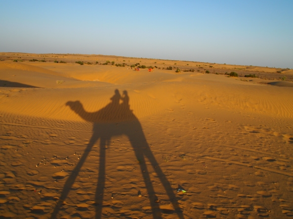 camel shadows