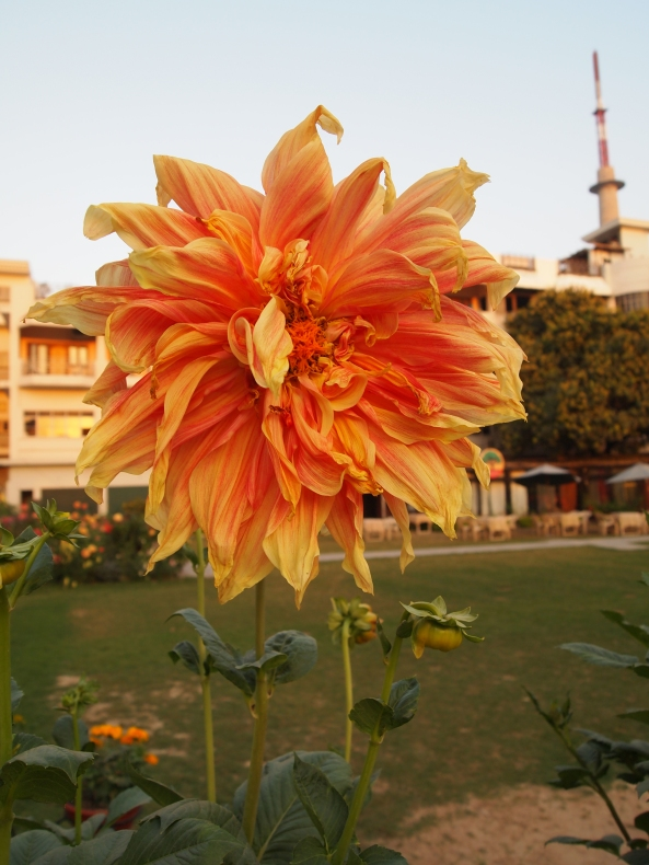 flowers on the grounds of the hotel surya where we have our oil-drip massages