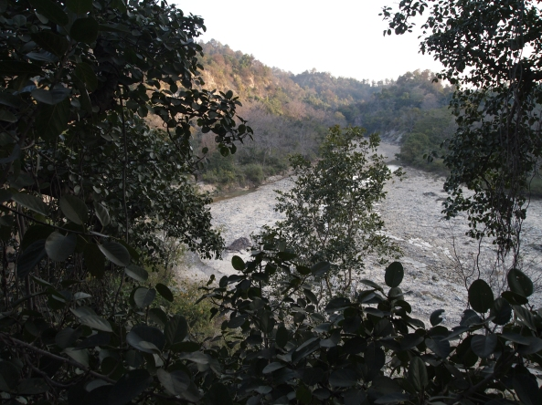 "the view of the ""moonsoon"" river from the Banyan tree house"