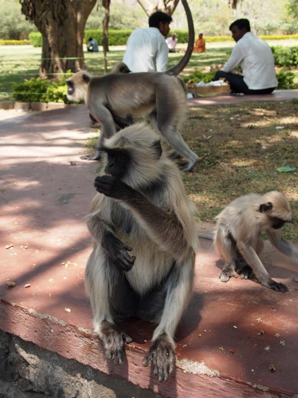 monkeys at Ellora cave temples