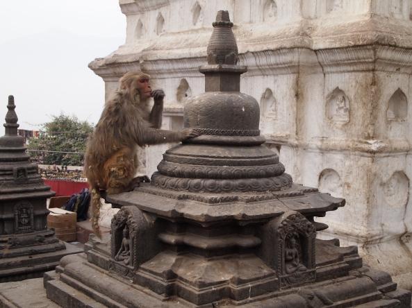 """monkeys at """"The Monkey Temple"""""""