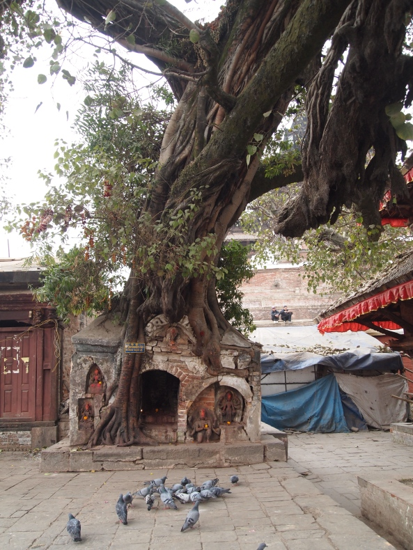 A shrine being squished by a tree