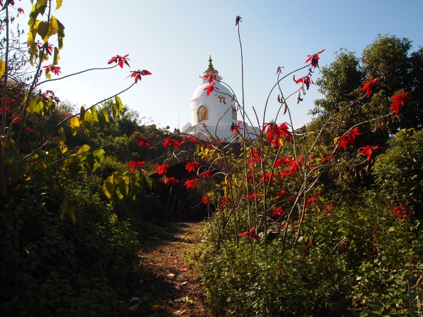 parting shot of the Peace Pagoda with poinsettia plants