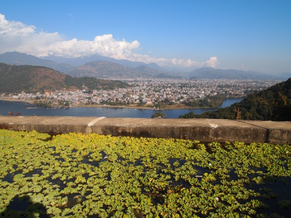 the view over the water hyacinth pond