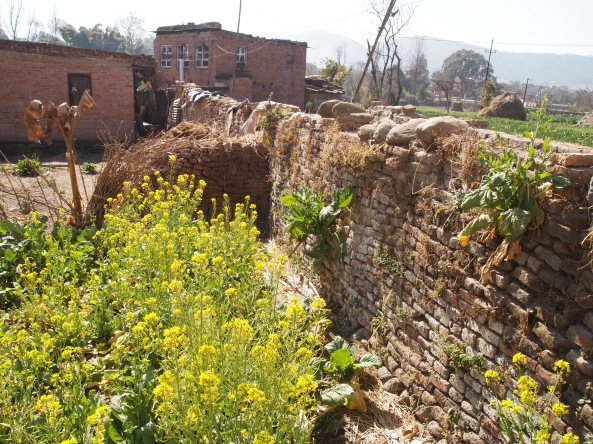 a wall around a garden of mustard in Bhaktapur, Nepal.