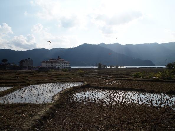 waterlogged water hyacinths