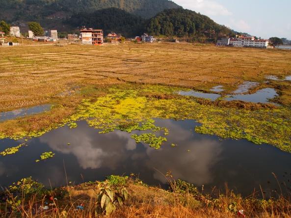 wetlands along Phewa Tal lakeshore