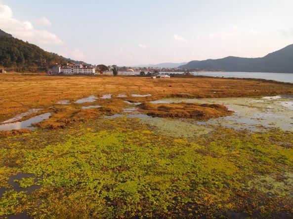lakeshore wetlands