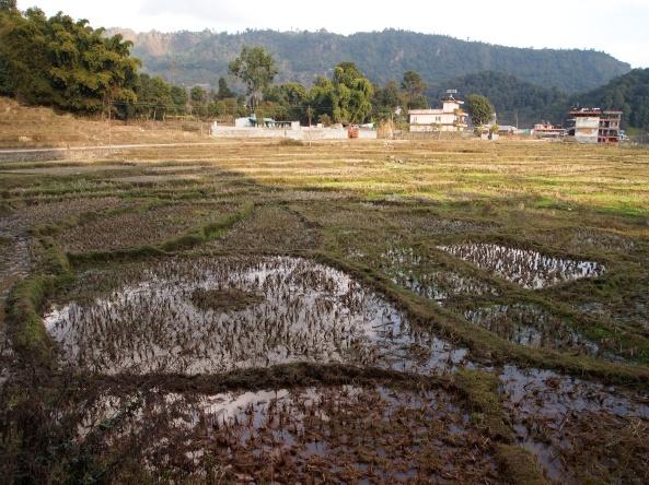 more wetlands