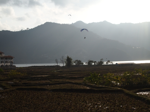 paragliders coming in for a landing